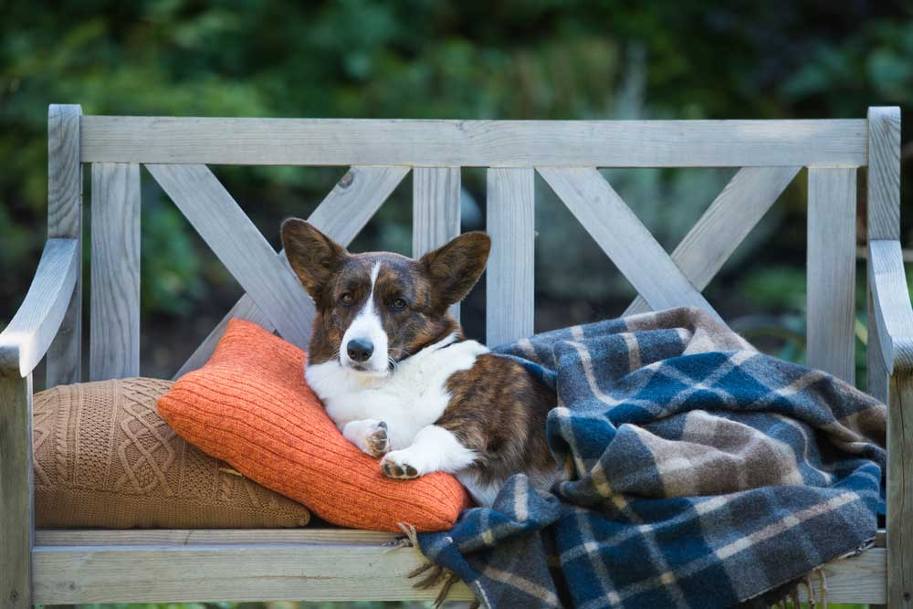 Met deze items geniet je ook in de herfst nog van je tuin of balkon