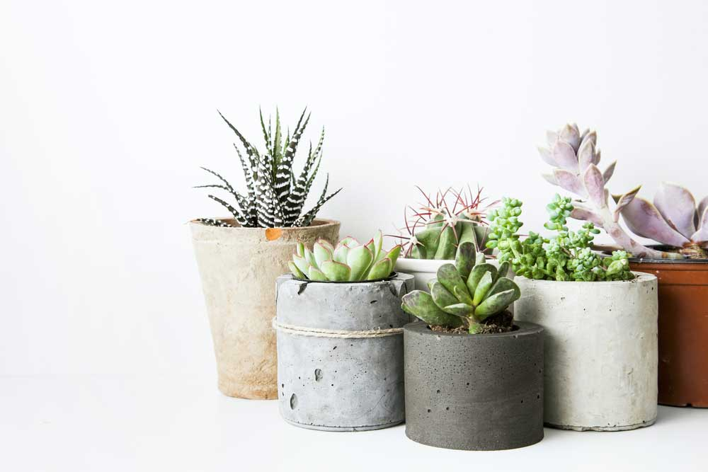 Originele plantenpotten: voorbeelden en inspiratie