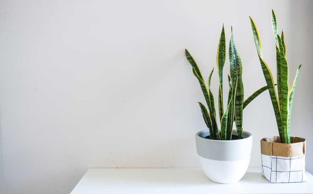Spelen met kleurvlakken: originele plantenpotten