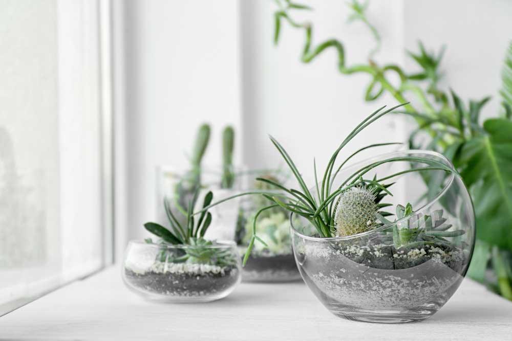 De glazen bol om planten in te zetten: een ware trend