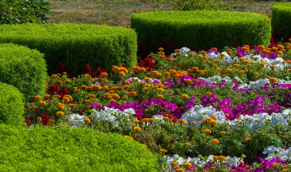 Vrolijke border in kleurrijke tuin
