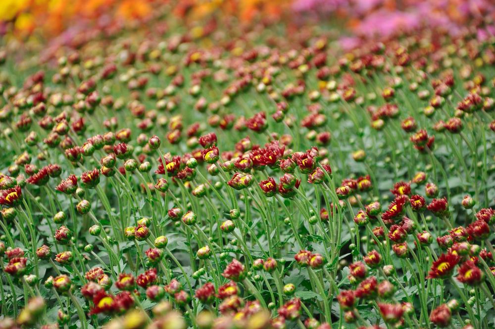 Uitgebloeide planten