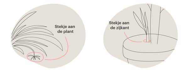 Herken type plant1